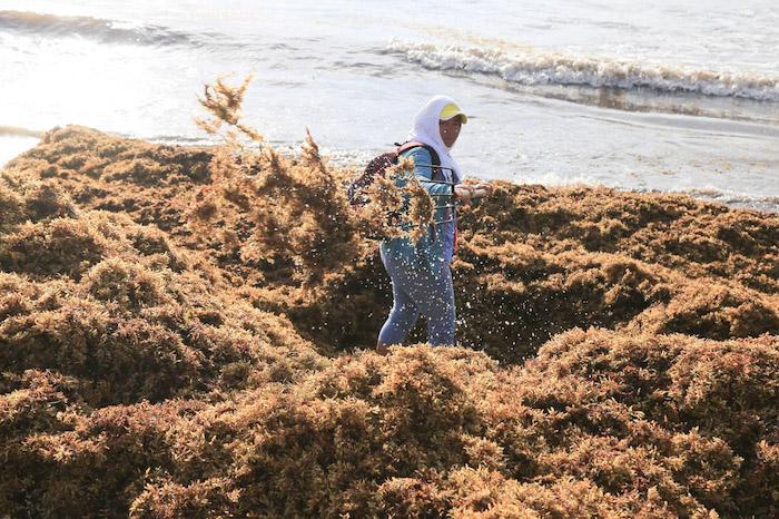 playa del carmen sargazo 4